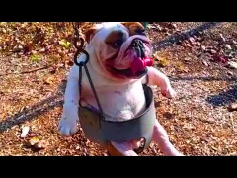 Funny Dog Videos Compilation  , Dogs 1080p