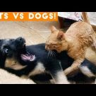 The Funniest Dogs Vs. Cats Compilation 2018| Funny Dog Videos