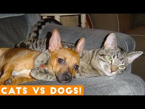 The Funniest Dogs Vs. Cats Compilation 2018| Funny Pet Videos