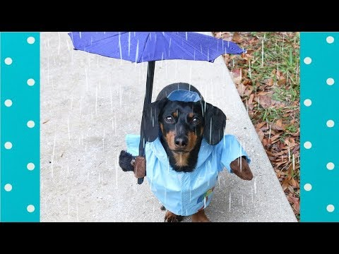Try Not To Laugh: Funny Dogs Reaction to Rain |Top Dogs Video Compilation