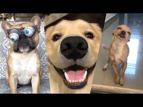 TRY NOT TO LAUGH or SMILE Watching Funny Dogs 🐶 Funny Vine Videos (Dogs Edition)