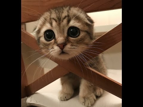 ♥Cute Dogs and Cats Doing Funny Things 2018♥ #77 – CuteVN