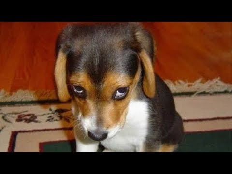 GUILTY DOGS – Funny Dogs Compilation