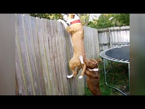 DON'T GIVE your DOG COFFEE! – Super FUNNY HYPER DOGS videos