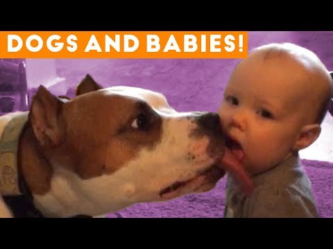 Most Adorable Dog and Baby Compilation Ever | Funny Pet Videos