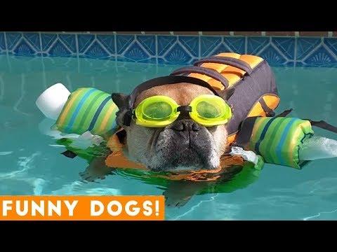 Good Dogs Best Dog Videos Animals Compilation   Funny Pet Videos June 2018