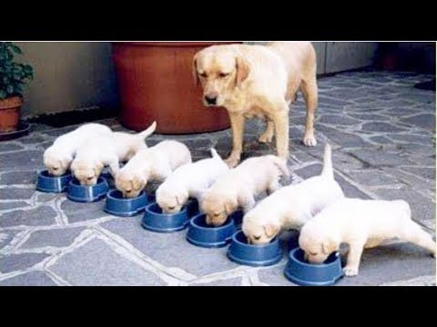 'Dogs compilation': funny videos