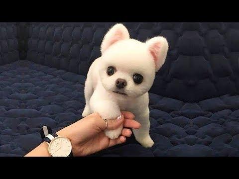 Cute Is Not Enough 🔴 Funny Cats and Dogs Videos Compilation (2018) Perros y Gatos Recopilación