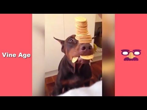 Funny Dogs Compilation (w/Titles) TRY NOT to LAUGH Watching Funny Videos June 2018 – Vine Age✔
