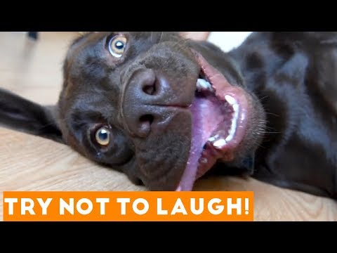 Try Not To Laugh Funniest Animal Compilation June 2018 | Funny Pet Videos