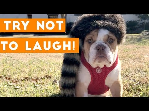 Try Not To Laugh Funniest Animal Compilation July 2018 | Funny Pet Videos