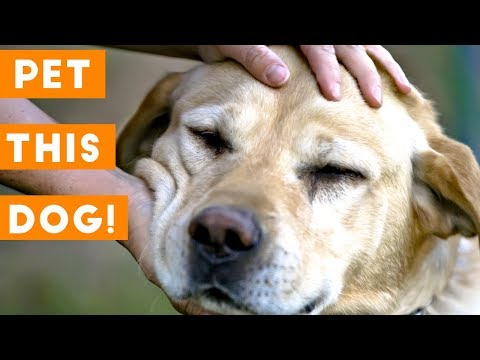Pet This Dog – Cutest Puppies Getting Loved Compilation | Funny Pet Videos