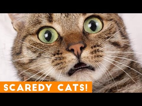 Funniest Scaredy Cat Compilation 2018 | Funny Pet Videos!