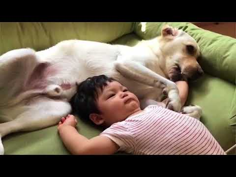 Dog and baby are best friend | dog and baby funny videos Compilation 2018