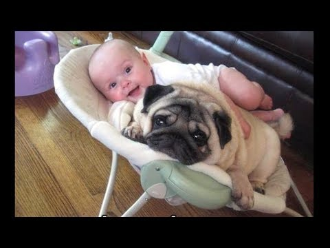 Funniest and Cutest Pug Dog Video Compilation #15