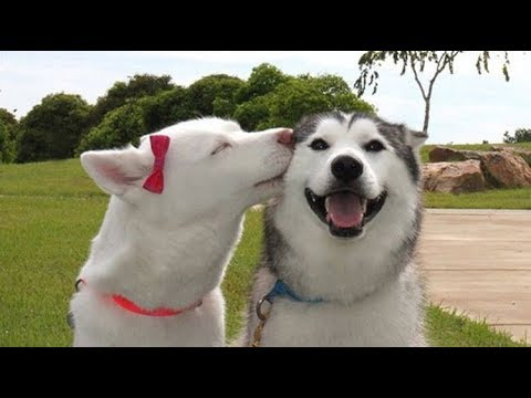 Cute and Funny Dog Videos Compilation – Amazing Facts #3