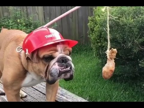 Cute Is Not Enough – Funny Dogs and Cats Best Video Compilation #4