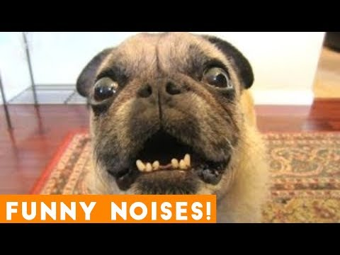 Funniest Animal Sounds Compilation of 2018 | Funny Pet Videos