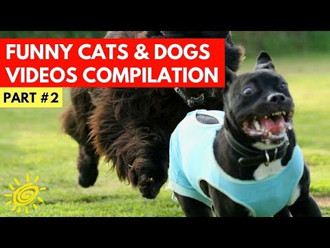 Funny Cat And Dog Videos #2