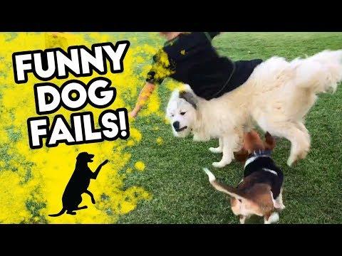 FUNNY DOG FAILS | Funniest Dog Videos on Youtube! | FB, IG, SNAPCHAT | September 2018