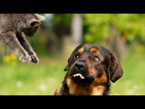 Funny Dog and Cat Videos Funny 🐶 😹 Cats Vs Dog Compilation [NEW HD]