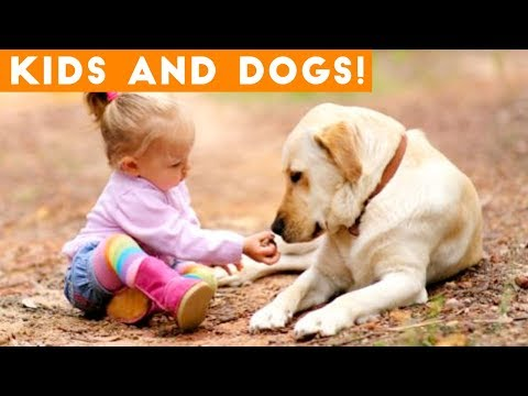 Most Adorable Dog and Baby Compilation Ever   Funny Pet Videos