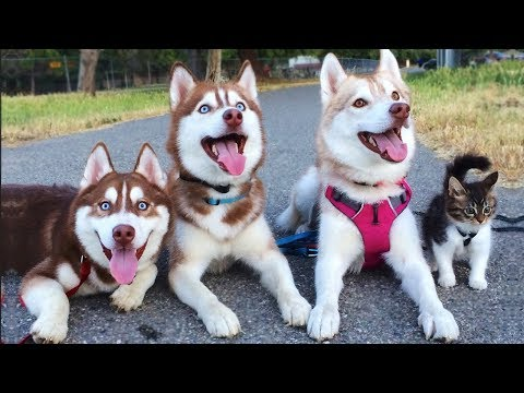 Cute is Not Enough – Funny Cats and Dogs Compilation #201