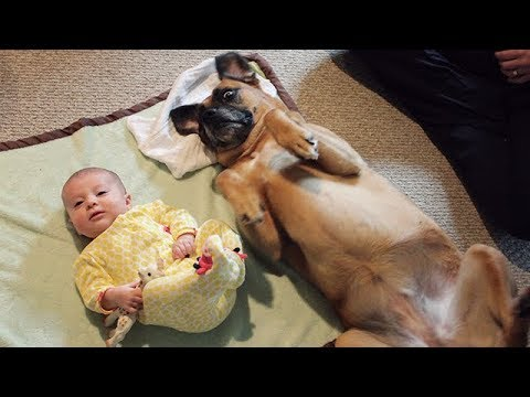 CUTE Babies and Dogs Doing Funny Things – Funny Dog and Baby Videos Ever