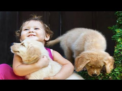 CUTE AND FUNNY PUPPY DOG GOLDEN RETRIEVER | Top Dog Videos Compilation