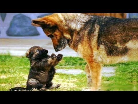 ♥Cute Dogs and Cats Doing Funny Things 2018♥ #5 – Funny Cat and Dog compilation