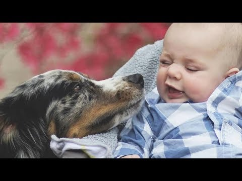 Funniest Dogs Love Sweet Baby Moments – Cute Baby Video