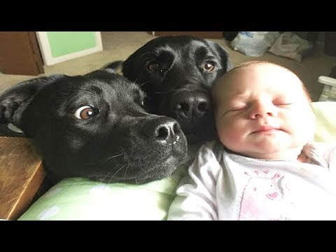 Dog Meeting Newborn Baby for the First Time – Funny Cute Video