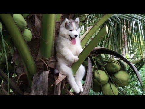 Cute is Not Enough – Funny Cats and Dogs Compilation #205