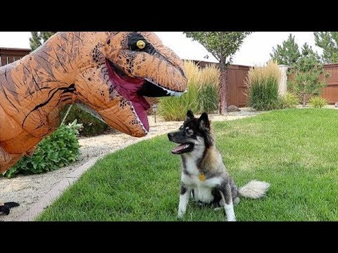 FUNNY DOGS REACT TO T-REX DINOSAUR COSTUME |Top Dog Video Compilation