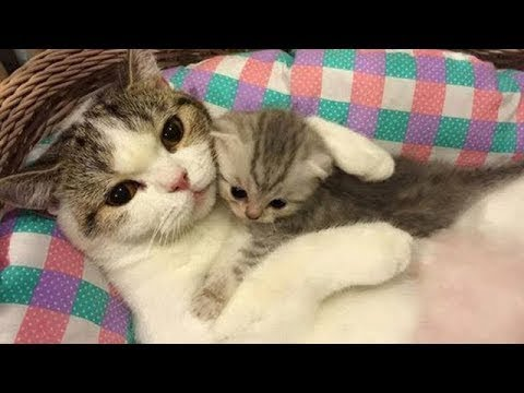 Cute Cat and Dog Healing & Funny Video 2018 part8