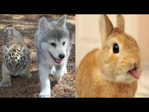 Cute Animal Doing Funny Things – Cute Animal Music Videos | Funny Dogs And Cats