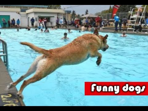 TRY NOT TO LAUGH | Funny Dogs Compilation | Funny Dogs Videos