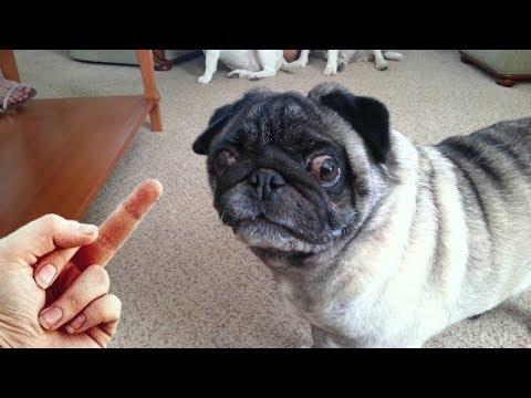 Dog Really Hates Middle Finger – Compilation NEW