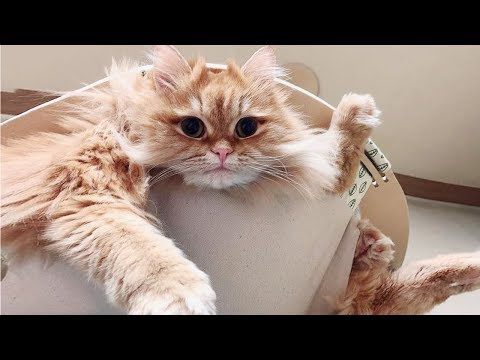Funny Cat and Dog Stucking –  Funny Pets Video