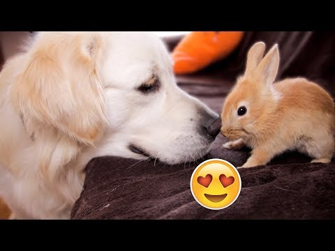 Funny Dog Bailey and Cute Rabbit Sam are Best Friends