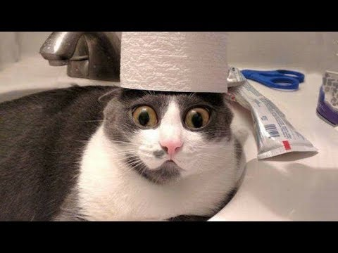 Funny and Cute Dog and Cats Videos Compilation 2019 – Try Not To Laugh 2019