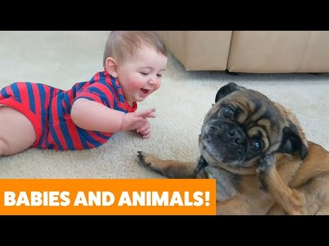 Adorable Dogs, Cats and Babies Playing | Funny Pet Videos 2019