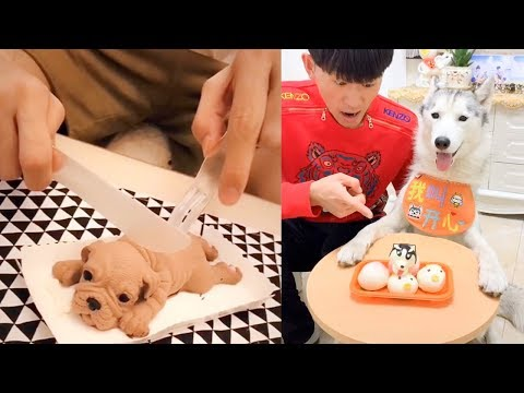 Dog Reaction to Cutting Cake – Funny Dog Cake Reaction Compilation (2019)