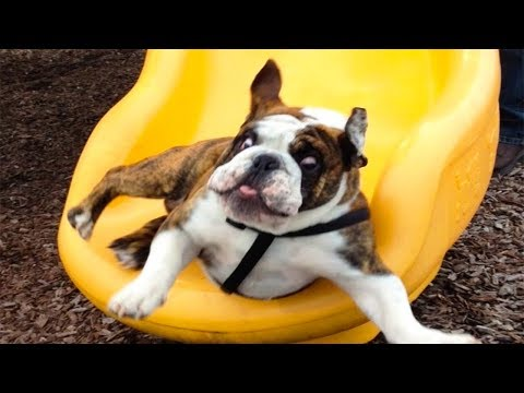 FUNNIEST DOG FAILS on SLIDE Compilation | Top Dog Video