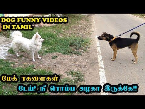 மேக் ரகளைகள்  | டேய் ! நீ ரொம்ப அழகா இருக்கே !! | Funny Dog Videos in Tamil – Mac(k) Videos