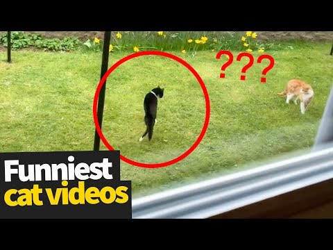 Hilarious Cat Viral Videos | Ultimate Cat Compilation 2019
