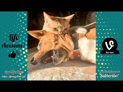 TRY NOT TO LAUGH – Cute and Funny Dog Videos Compilation 2019 | Life Awesome