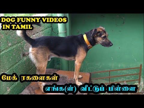 மேக் ரகளைகள் | எங்க(ள்) வீட்டுப் பிள்ளை | Dogs funny videos in Tamil