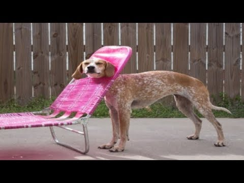 Funny CLUMSY DOGS Compilation – Funniest Dogs Video 2019