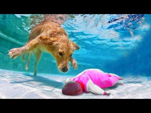 Dog And Baby Take A Swim Very Funny Time | Funny Baby Video